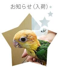 BIRD SHOPくるみの小鳥紹介
