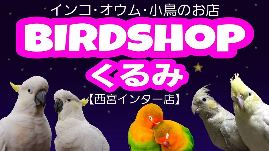兵庫西宮にある小さな小鳥店 BIRD SHOPくるみ 西宮インターでは、大型オウム ・中型インコ・小型インコを中心に販売しております。